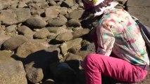 Bretagne Morbihan : Dany cailloux