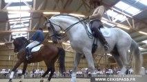 Journée régionale du cheval à Magny-Cours (Nièvre)
