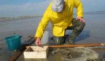 CALAIS : Pêcheurs de crevettes sur la plage de Calais