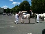 Saint-Pol : concours de chevaux boulonnais