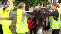 L'asinobus: des ânes comme bus scolaire - 09/09