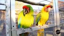 Drôle d'oiseaux! Jean-Pierre est amoureux de ses perroquets.