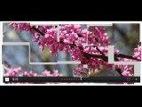 Hi Slider is Cool Free Wordpress Image Slider Maker Released by HiSlider.com