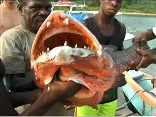 Abraham_Rock : chasse sous-marine