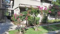Greenback Gardens Apartments in Citrus Heights, CA - ForRent.com