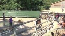 Arezzo de Lanlore Sologn Pony 2013  Saut en liberté Liberté