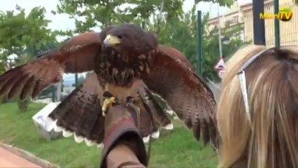 Miami TV -Jenny Scordamaglia @ Spain - Aves Rapinia