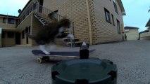 Un chat fait un hippy jump en skateboard