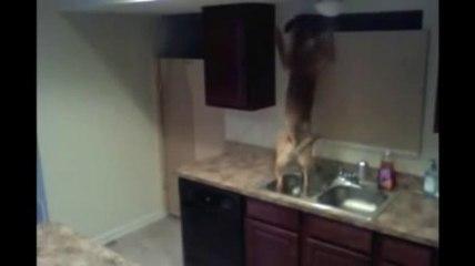 Un chien Prison Break !