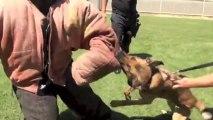 Police K9 Decoy Training Falco K9 Academy