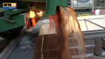 Vendanges nocturnes: récolter le raisin à basse température améliore la qualité - 21/09