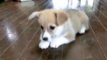 Des bébés chiens trop mignon dans cette compilation!