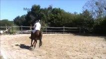 Démo Obstacle Lylacha -Fête du cheval-