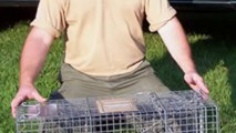 Wildlife Control - Mice & Rodent Removal CT
