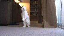 Un lapin qui marche comme un humain! Tellement marrant!