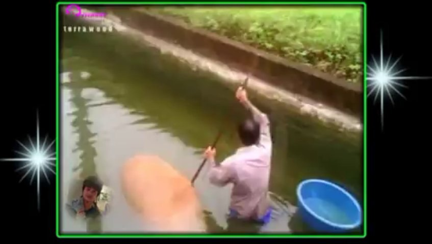 chú phấn bắt cá.