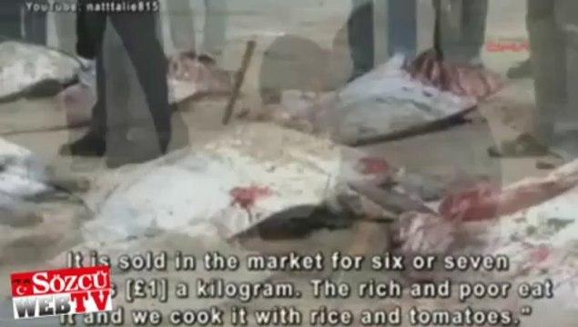 Deniz şeytanları Gazze'de karaya vurdu