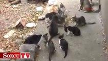 Sokak kedilerine sahip çıktı