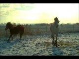 Pouliches et chevaux dans la neige 13 janv 13