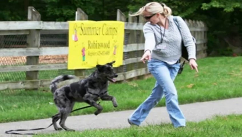 And Dog Training – The Online Dog Trainer