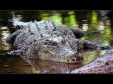 Crocodile traps NZ man on Australian island for two weeks