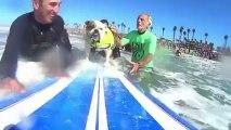 Los perros también surfean