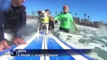 Cães surfistas na Califórnia