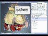 Interactive Knee - 3d Interactive Human Anatomy New 2009!