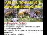 fazelya-tohumu,fazelya-phacelia-tanacetifolia, arı otu yetiştiriciliği,arı-otu-yetiştiriciliği, arı otu satışı,arı otu fiyatı, arı-otu-fiyatı