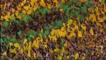 Ligue 1 - Zapping de la 9ème journée - 2013/2014