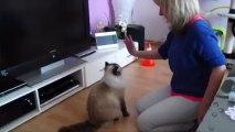 Clickertraining für Katzen High Five, Springen und andere coole Tricks