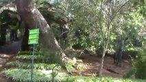 Madeira Jardim Botanico da Madeira Botanischer Garten (2)