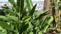 Madeira Jardim Botanico da Madeira Botanischer Garten (3)