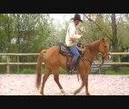 PORTE OUVERTE AU PRES SEC (chevaux)