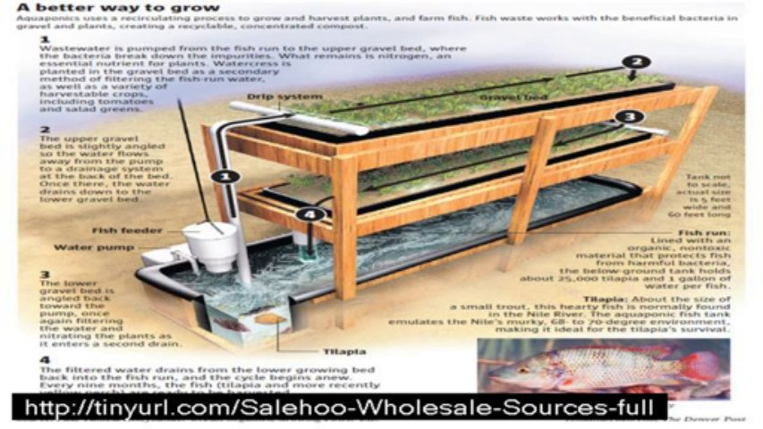 easy diy aquaponics  scam,