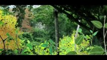 La Forêt De Miyori Film Complet Entier Vidéo Dailymotion