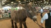 races mulassières du Poitou : 2013 Festival de l'élevage et de la gastronomie à Parthenay