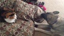 """Un chien parle à un chat : """"Dégage de mon lit""""! Trop marrant."""