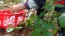 Cueillette de champignons - Cueillettes de champignons