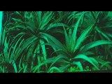 Le nom des plantes
