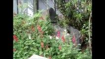Conservatoire botanique Brest