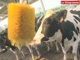 Grève du lait. Les producteurs ne serviront plus les laiteries