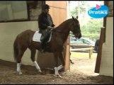 Dressage : le cheval sur la main