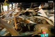 《自然密碼》20120514:澳洲動物精英