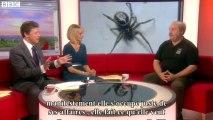 Les fausses veuves noires envahissent l'Angleterre, faut-il s'inquiéter ?