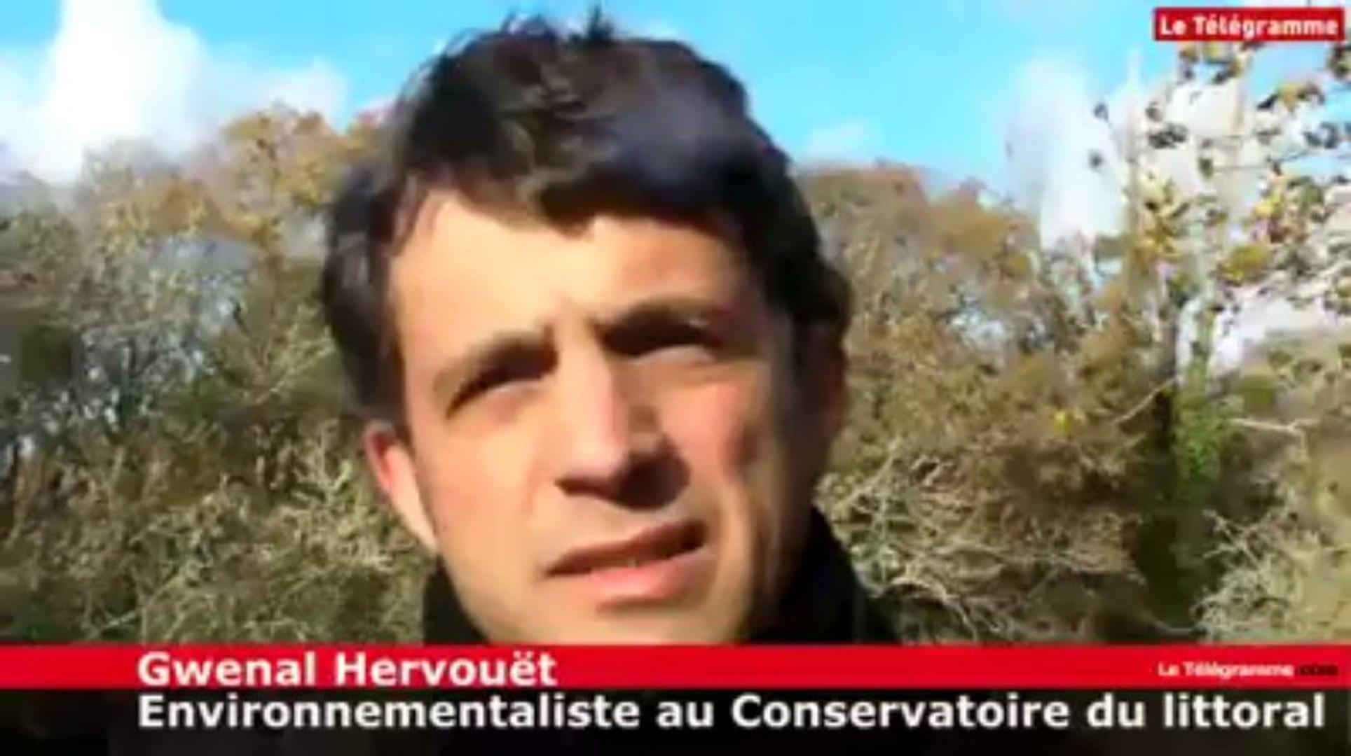 Fouesnant (29). A la reconquête de la biodiversité du marais
