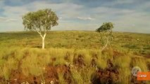 Researchers Discover Gold Growing in Trees in Australia