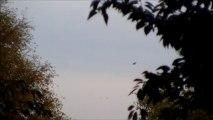 UFO/OVNI!!!! l'étrange chose indescriptible