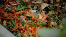 Je réduis mes déchets : que faire de nos déchets de cuisine et de jardin ?