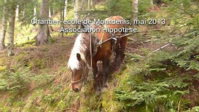 Débusquage au cheval en montagne, Hippotese 2013
